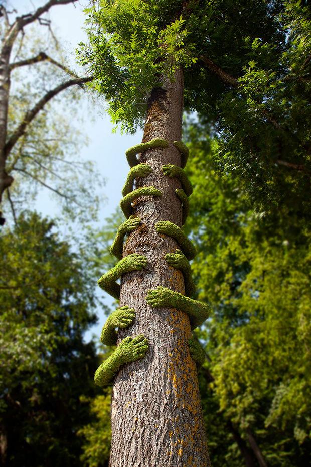 tree hug frankie 4
