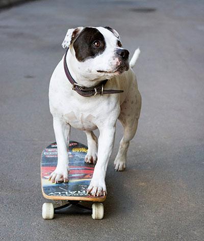 Skateboarding Chester