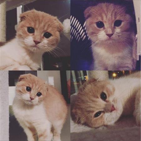 Bella Thorne Kitten