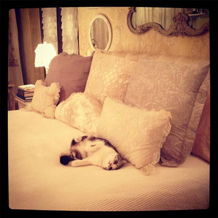 Meredith Makes Herself at Home!
