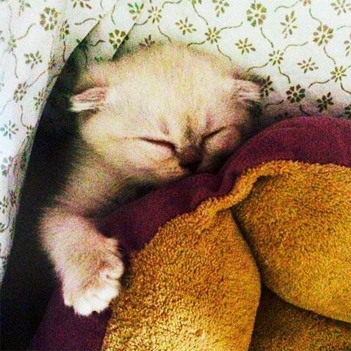 Photo: Taylor Swift's new kitten, Olivia Benson