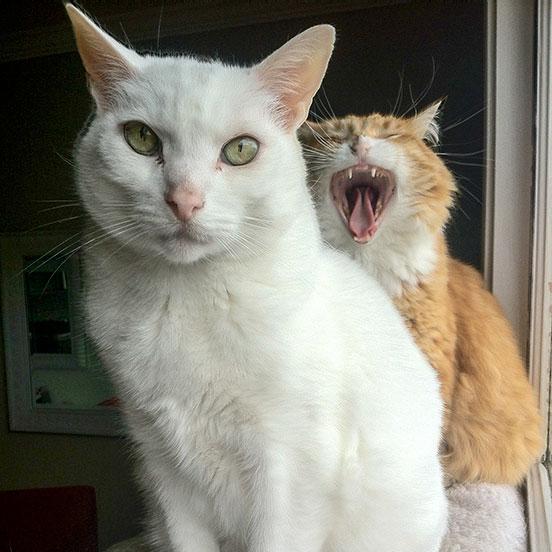Photobombing cat