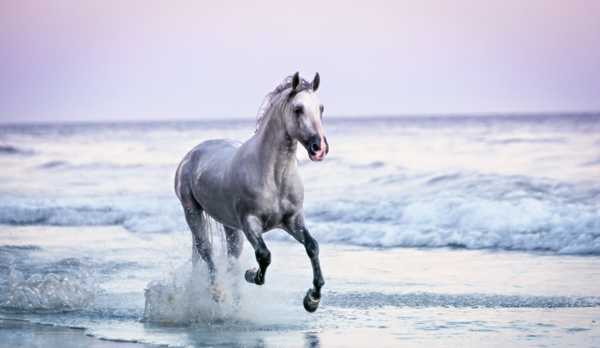 Cool facts about horses