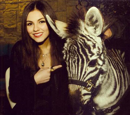 We don't think that Victoria's pet is a zebra. It's still pretty amazing though!